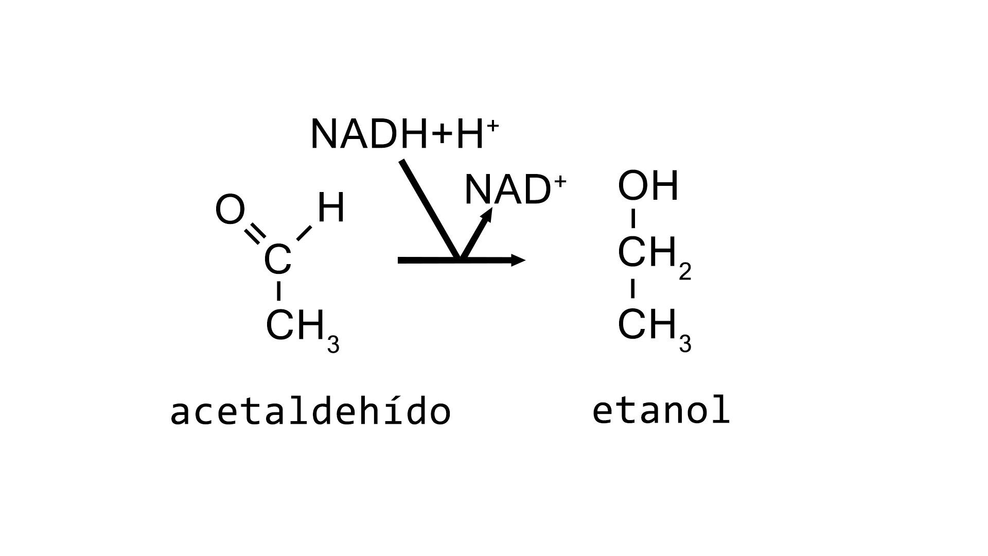Reducción del acetaldehído catalizada por la enzima alcohol deshidrogenasa
