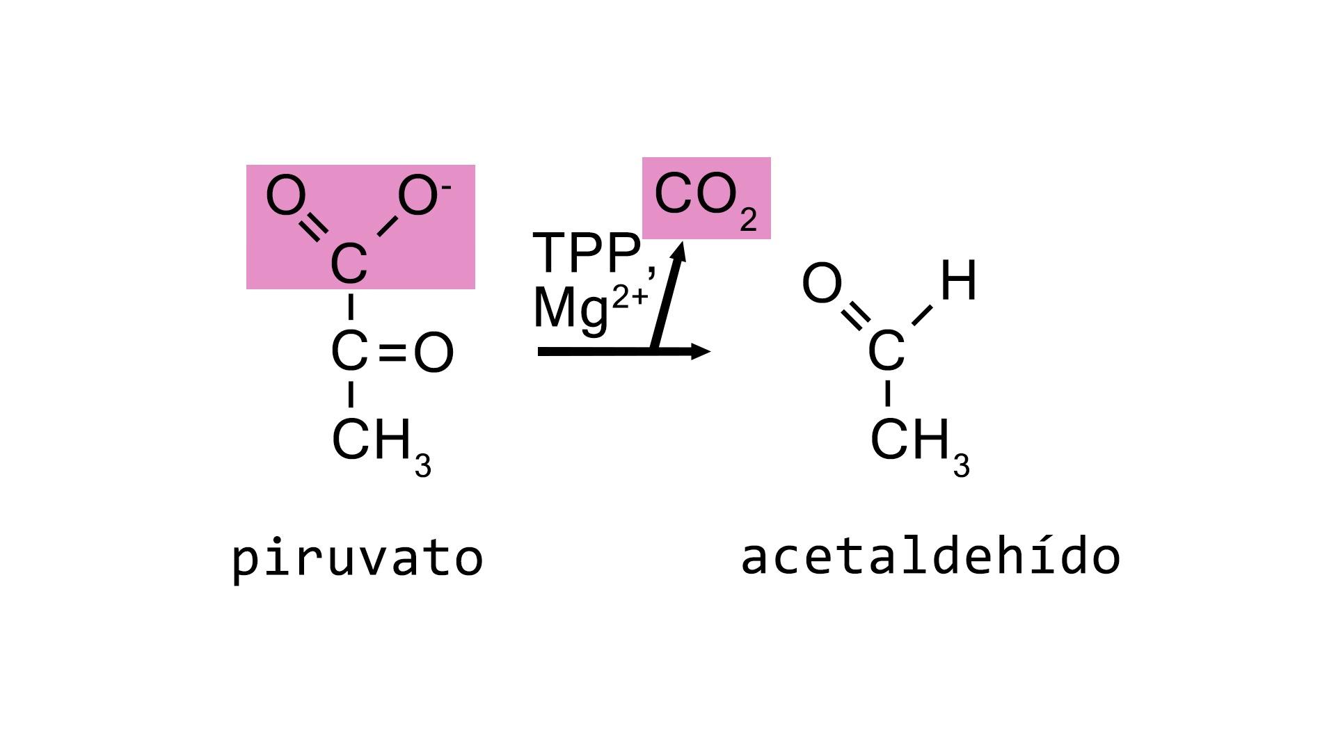 Descarboxilación del piruvato catalizada por la enzima piruvato descarboxilasa